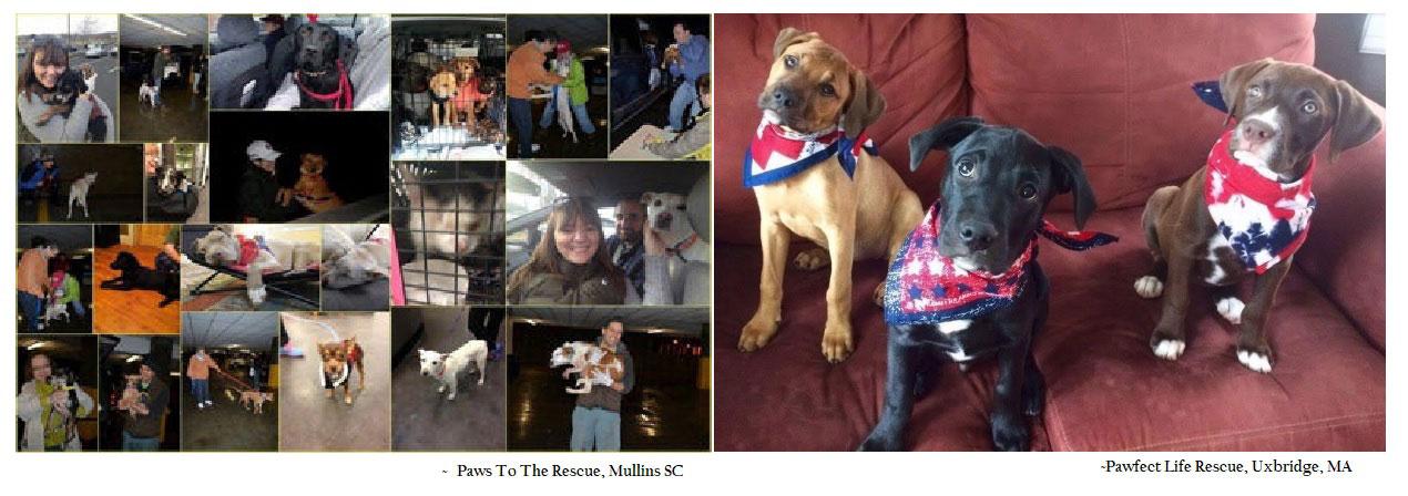 Animal Rescue Brick Fundraising