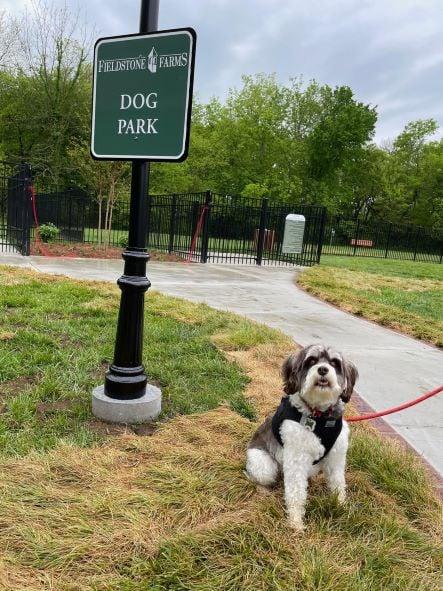Brick Fundraising For Dog Park